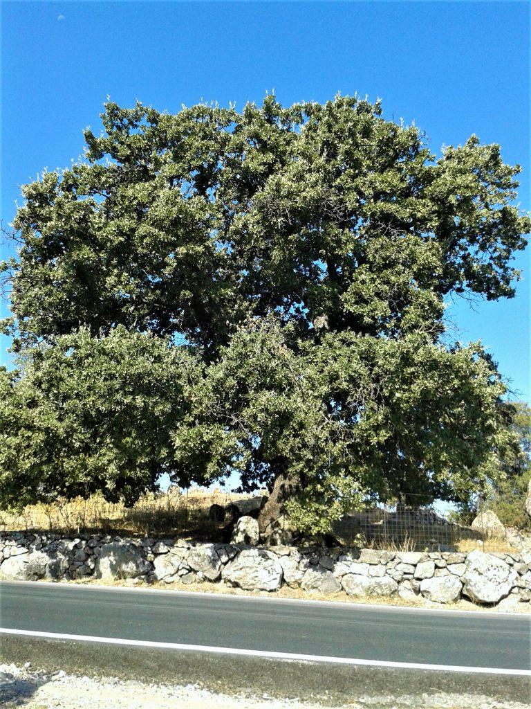 Museum Filia Lesbos Baum der Tränen Μουσείο Φιλιά Λέσβου